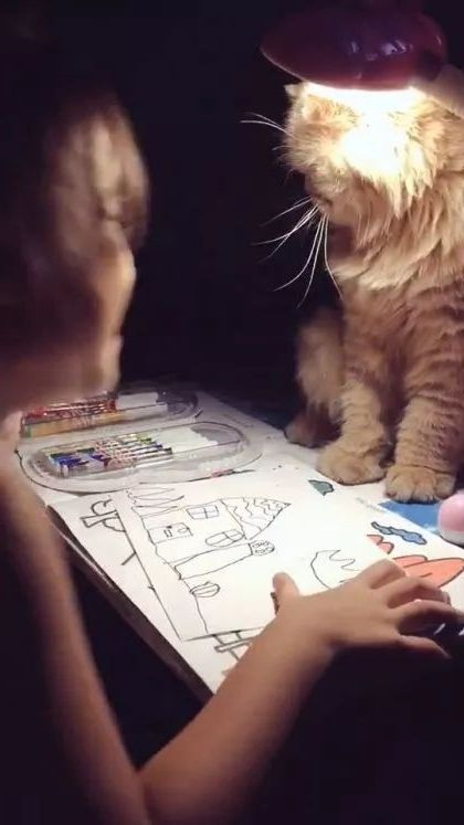 Cat also wants to learn with children