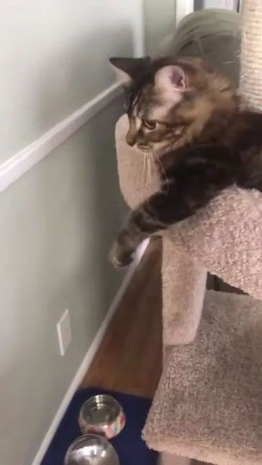 cat doesn't like another cat near him in kitchen