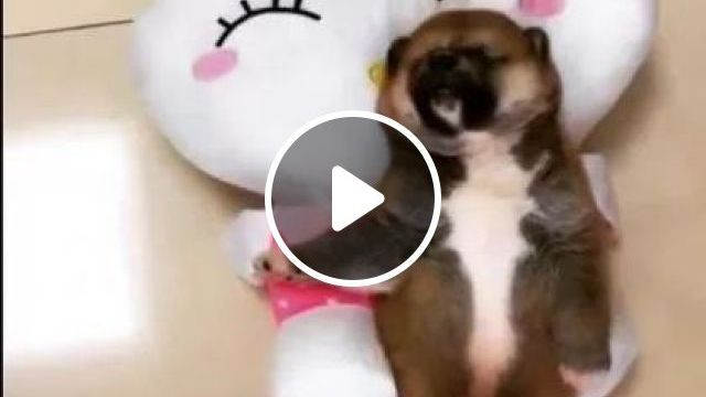In Apartment, Sleeping Puppy - Video & GIFs   Animals & Pets, apartments, furniture, puppies, dog breeds