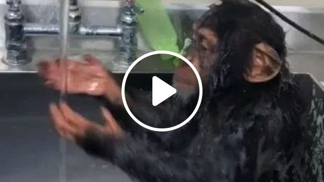 He picked his nose but he's cute, animals & pets, smart monkeys, bathroom equipment