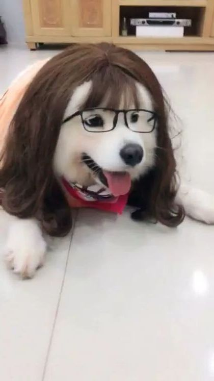 Cute dog and fashionable glasses