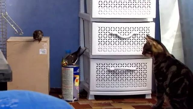 What is a cat thinking
