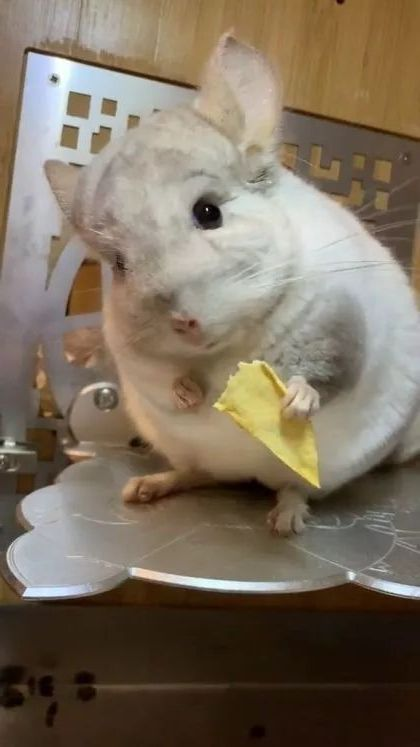 Lunch is potato chips - Video & GIFs | animals & pets,lunch,french fries,cute animals