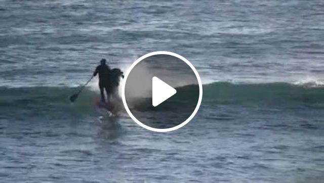 a man surfing with dolphins, animals & pets, men, sports clothes, friendly dolphins