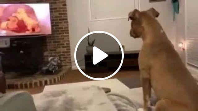 My dog cries during dramatic death scene in ' Lion King', Animals & Pets, Adorable dogs, breed dogs, smart dogs, big screen TVs, luxury TVs, luxury apartments
