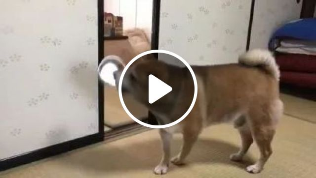 In Living Room, Dog Is Not Happy When There Is No Food - Video & GIFs | Animals & Pets, living room, luxury furniture, funny dogs, dog breeds, dog food