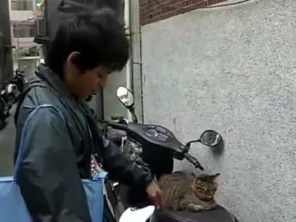 cat just likes to sit on his motorbike