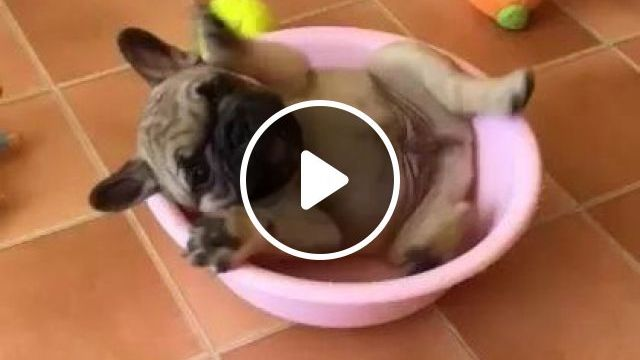 Puppy Likes To Play With Stuffed Animals And Plastic Pots In Living Room - Video & GIFs   Animals & Pets, cute puppies, stuffed animals, luxury apartments
