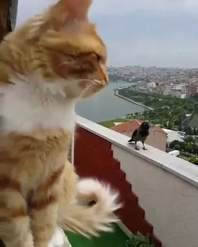 on the roof of apartment building,cat and bird are exchanging information