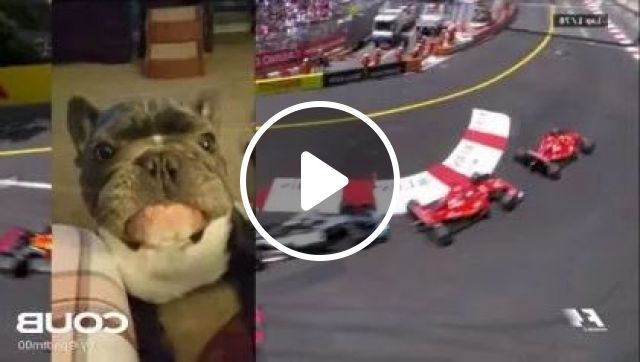 dog was happy to see Formula 1 cars on television, animals & pets, dogs, dog breeds, formula 1 cars, speed, engine technology, strong engines, televisions, high definition